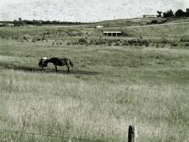 horse at feeedbag